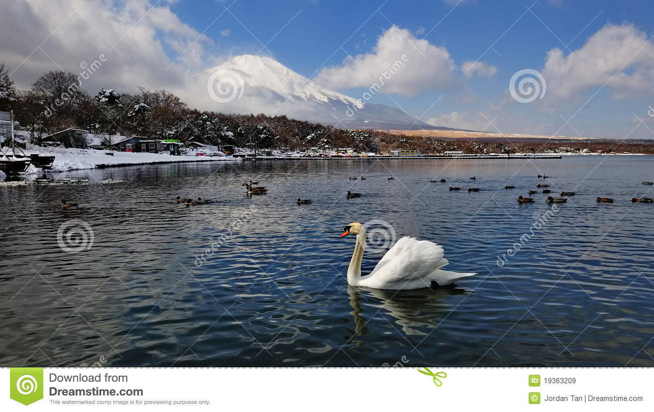 Mount Fuji And Lake With Swans And Ducks Royalty-Free ...
