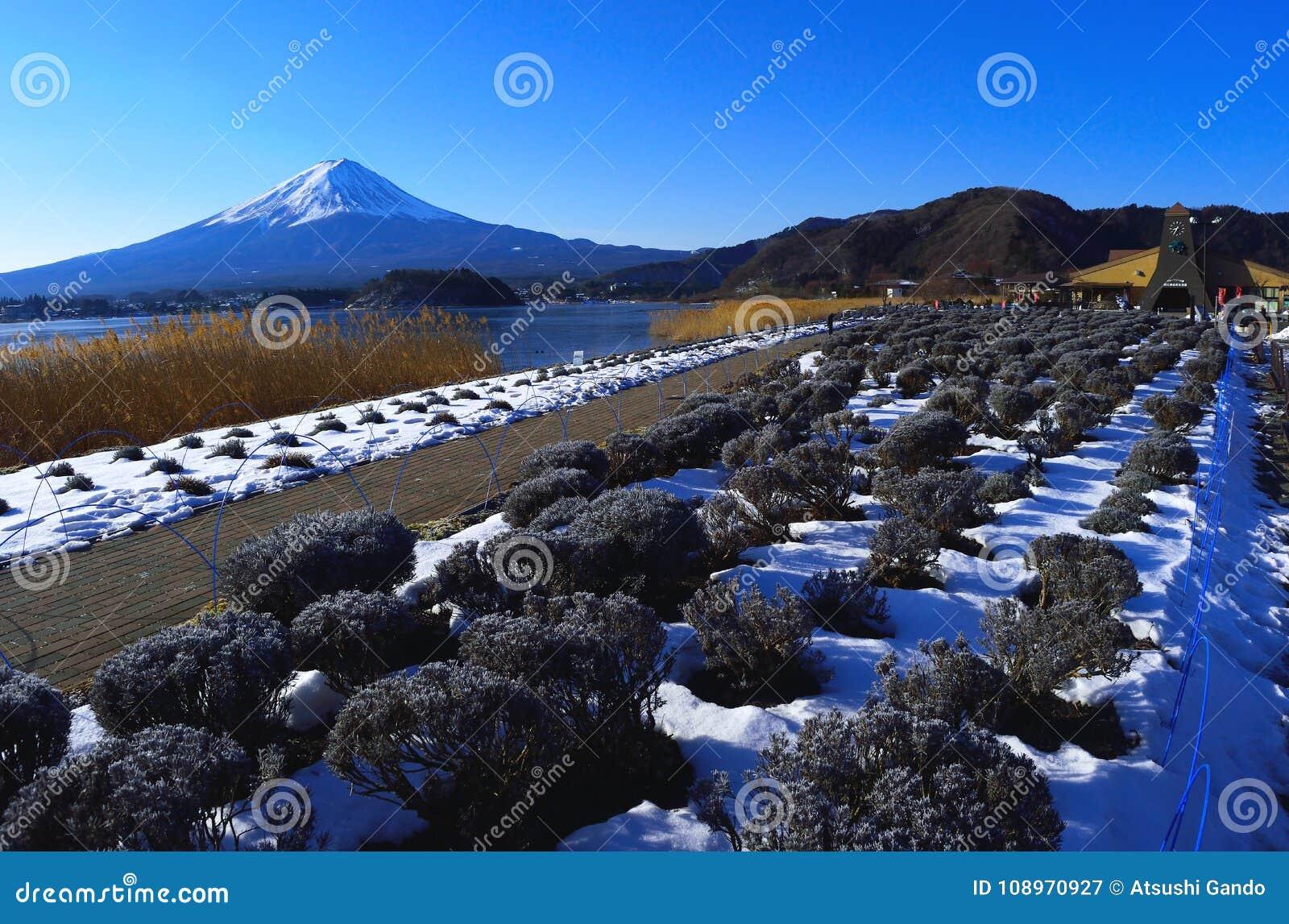 Mount Fuji of winter scene from Lake Kawaguchi Japan