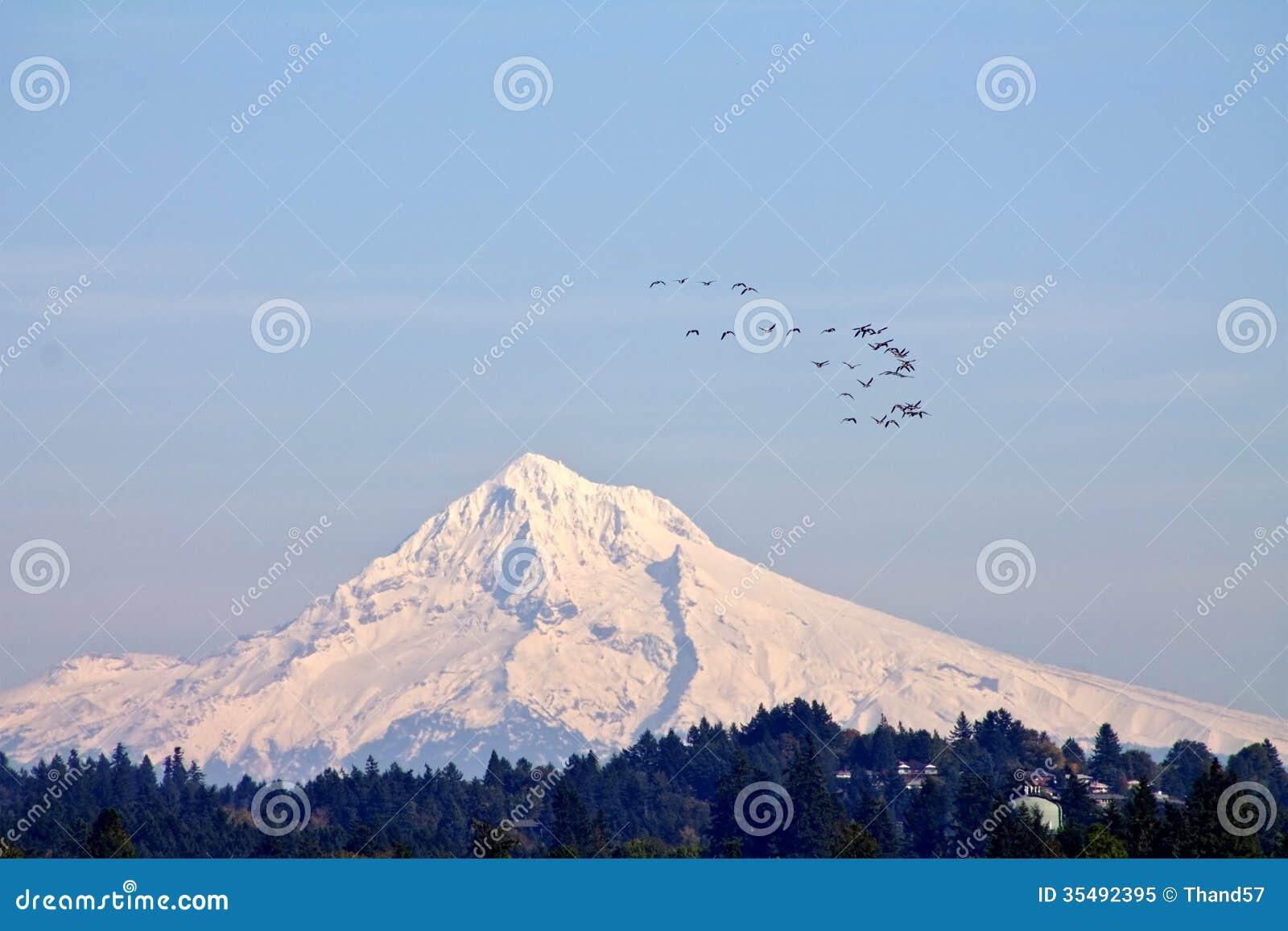 Mount Hood with geese flying