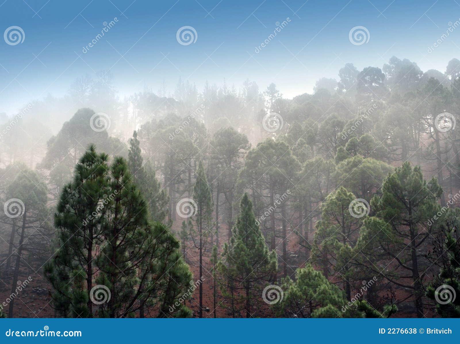 Mount mgły