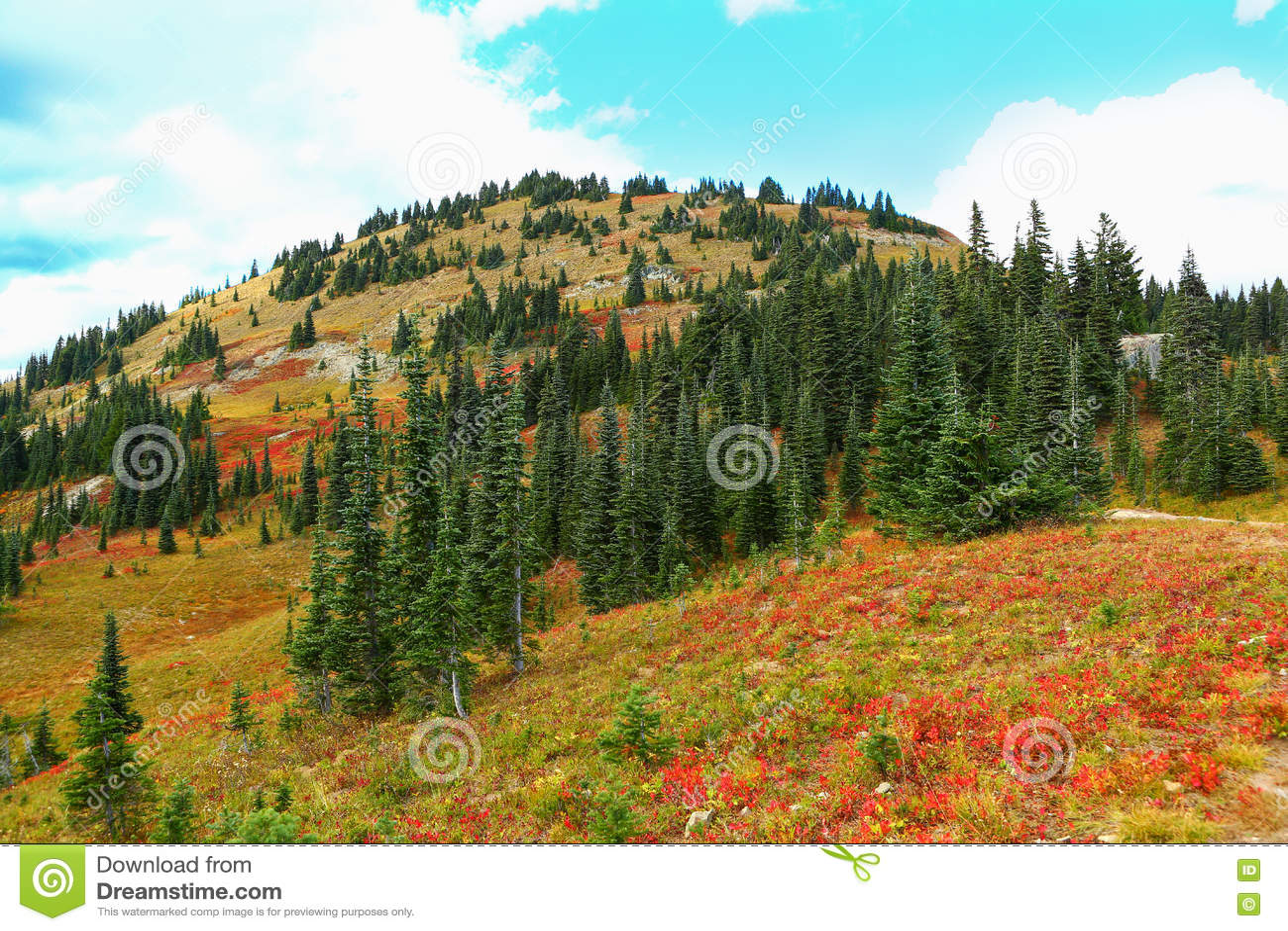 Mount Rainier, Washington. Fall red flowers