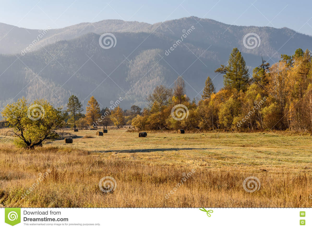 Mountain Autumn Trees Hay Stock Image Image Of Roll 78130719