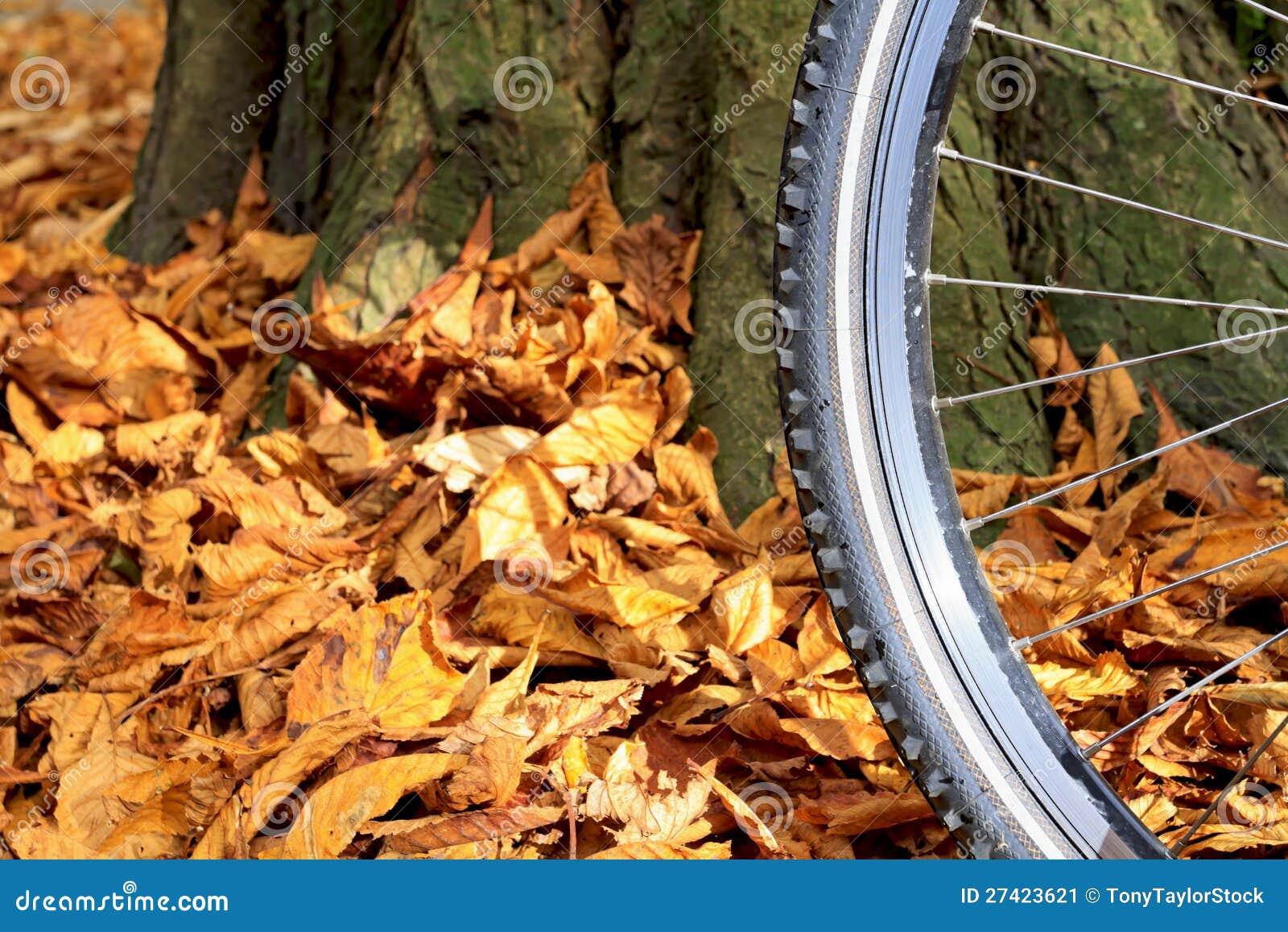 Mountain bike wheel and tire tread