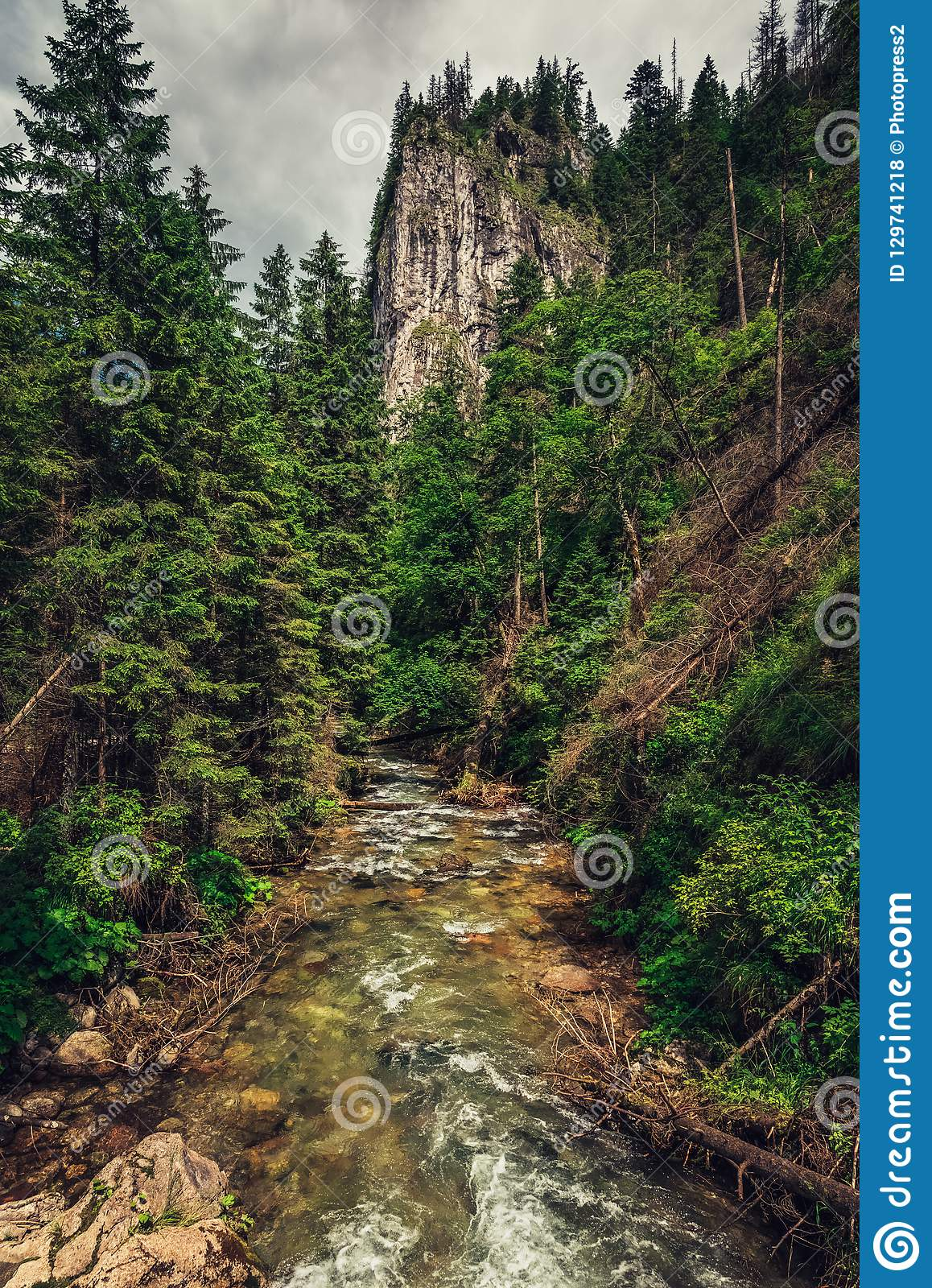 Mountain creek / river flowing between the forest.