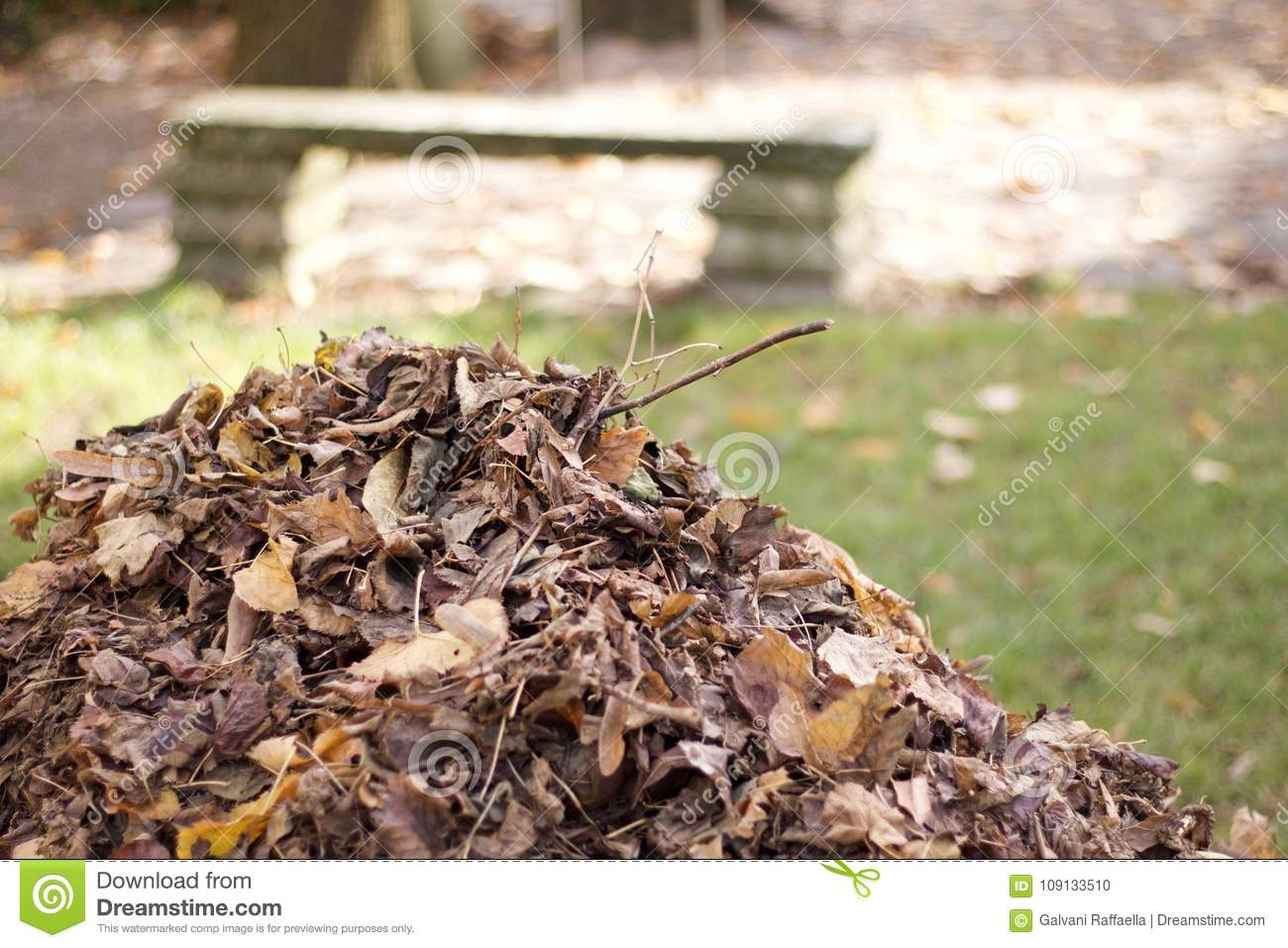 Mountain Of Dry Leaves Grouped In Autumn In A Park Stock