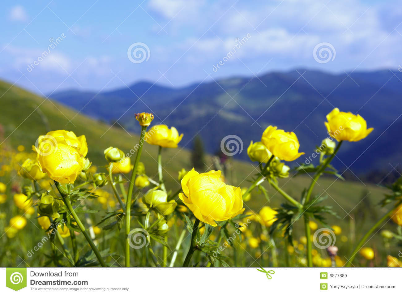 Flower Shop Near Me Skyrim Red Mountain Flower Id Flower Shop