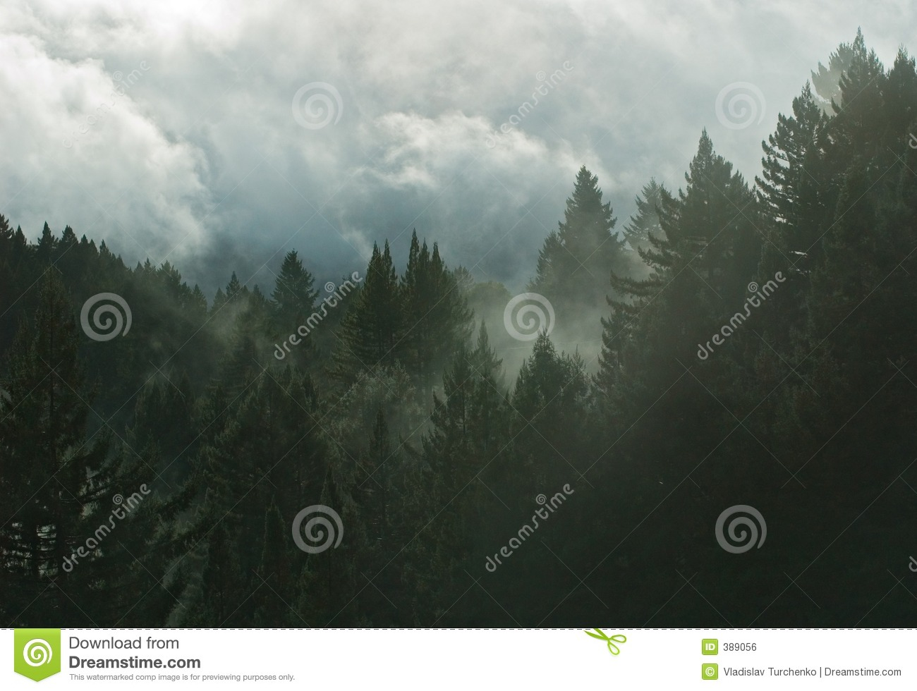 Mountain Forest in clouds