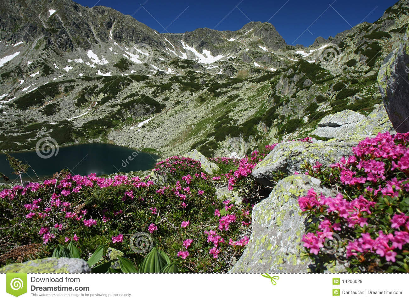 Mountain lake betwen flowers and snow patches