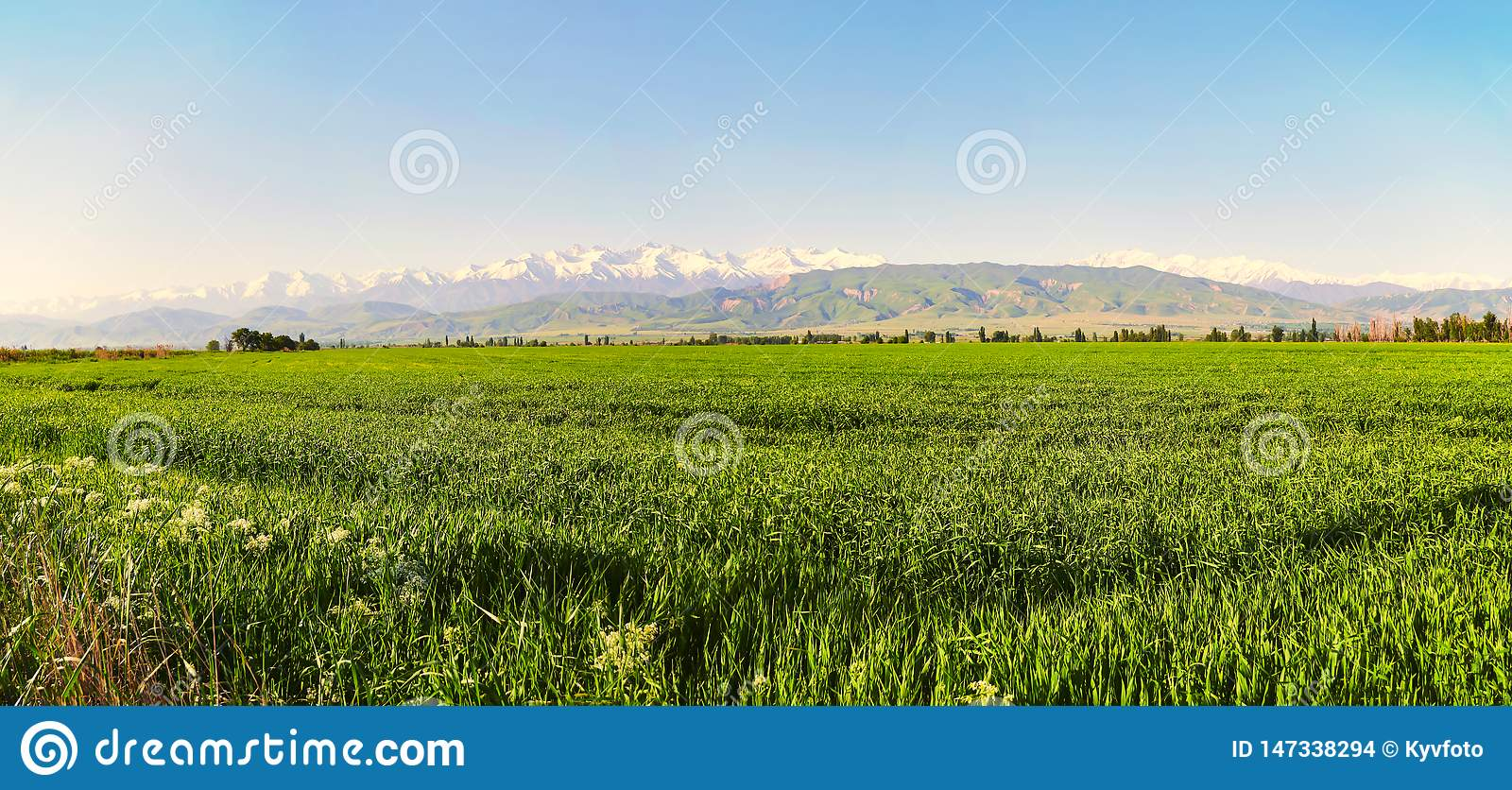 Mountain landscape. Fresh green meadows at sunrise in springtime, mountains lit by the rising sun