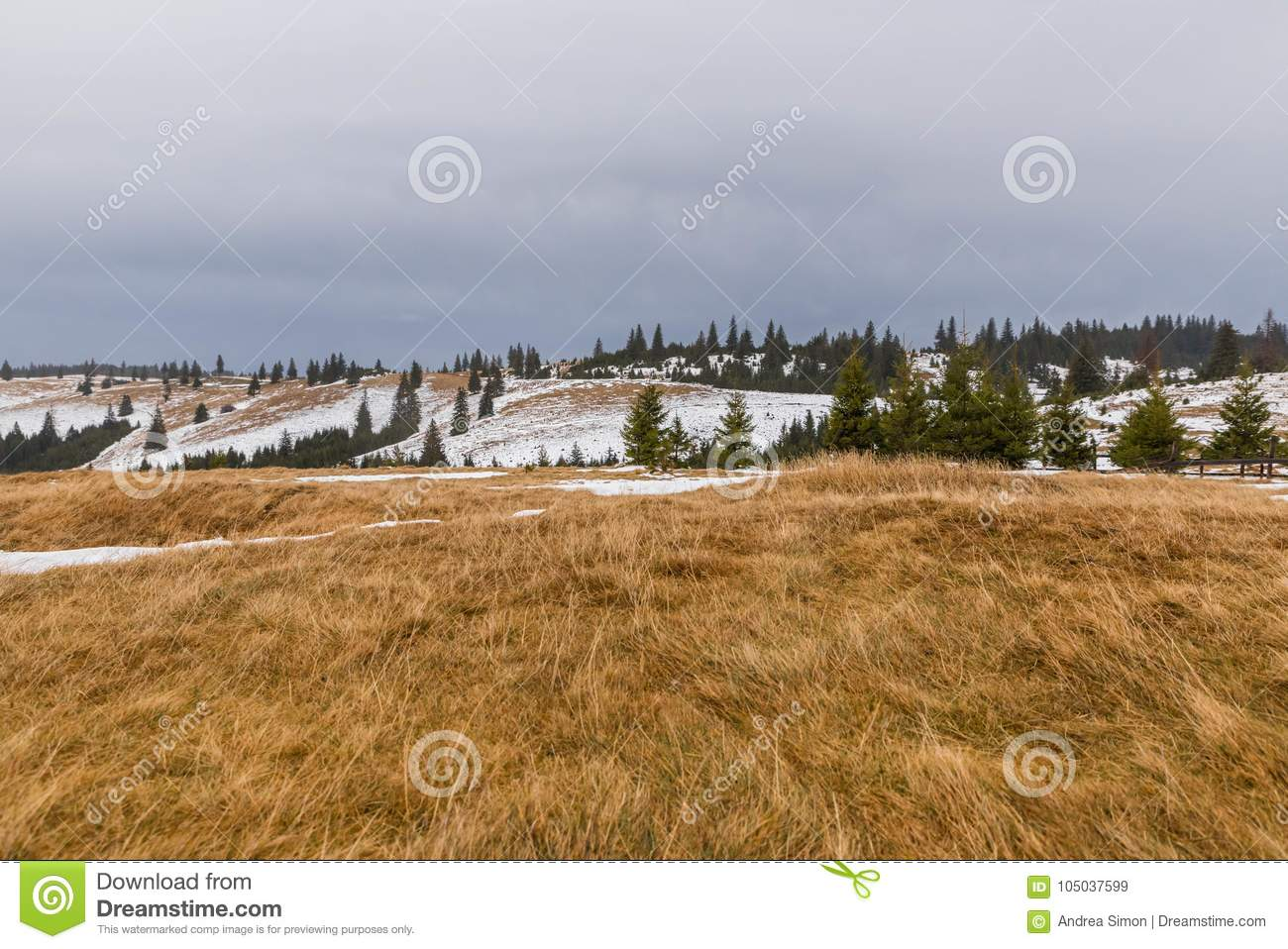 Mountain landscape and pine trees