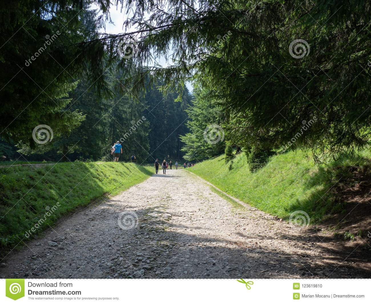 Mountain path in a middle of a forest