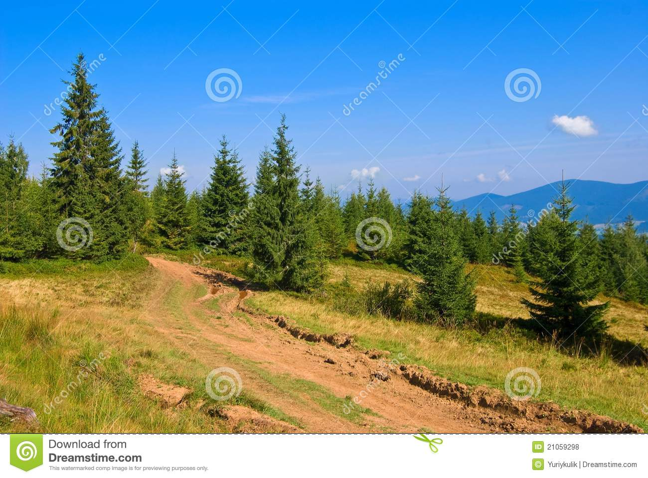 Mountain pine forest