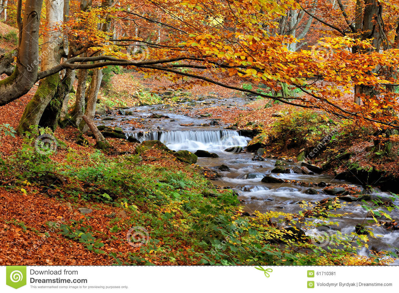 Mountain River In The Autumn Forest Stock Photo - Image ...