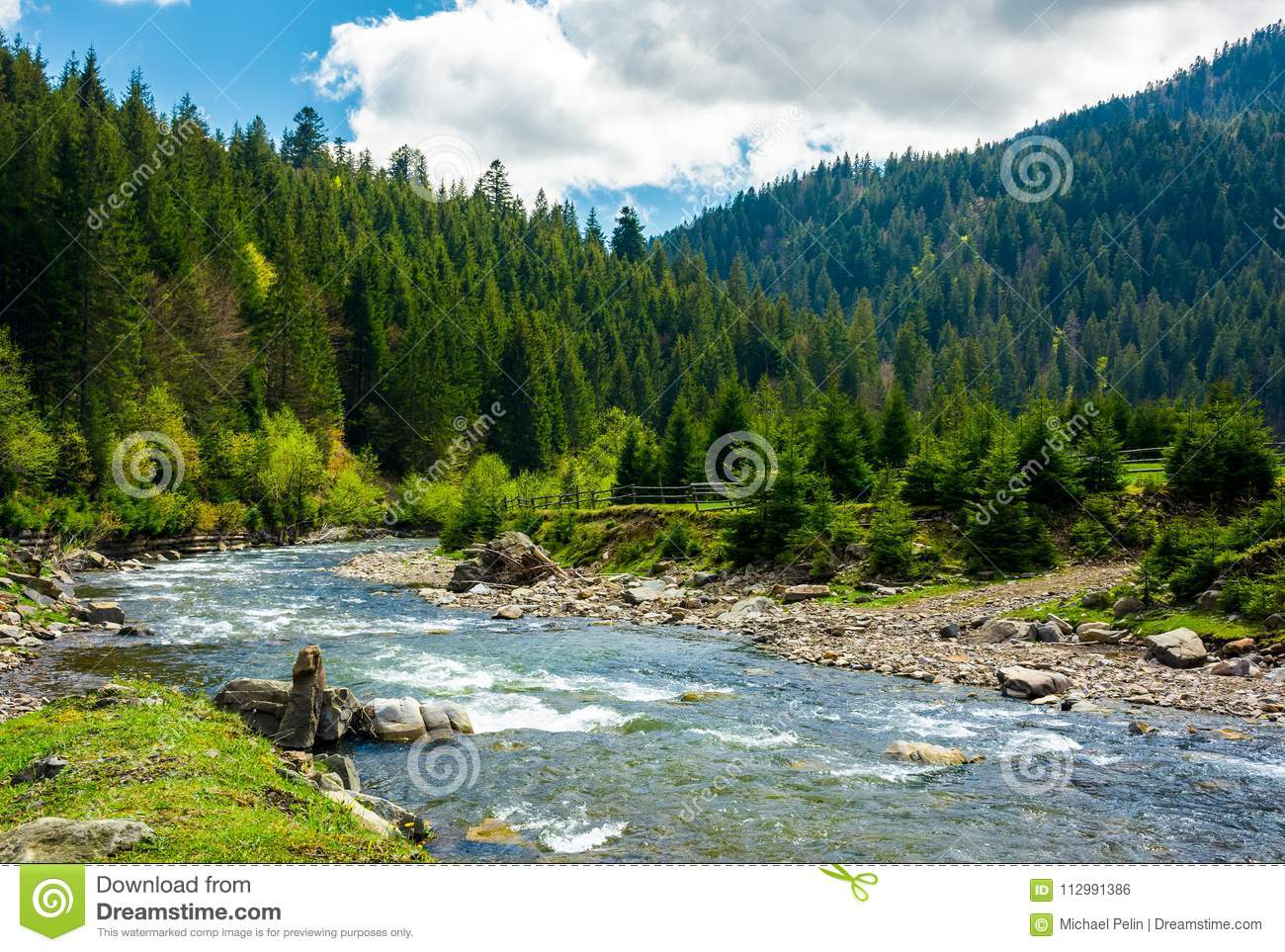 Mountain river among the spruce forest