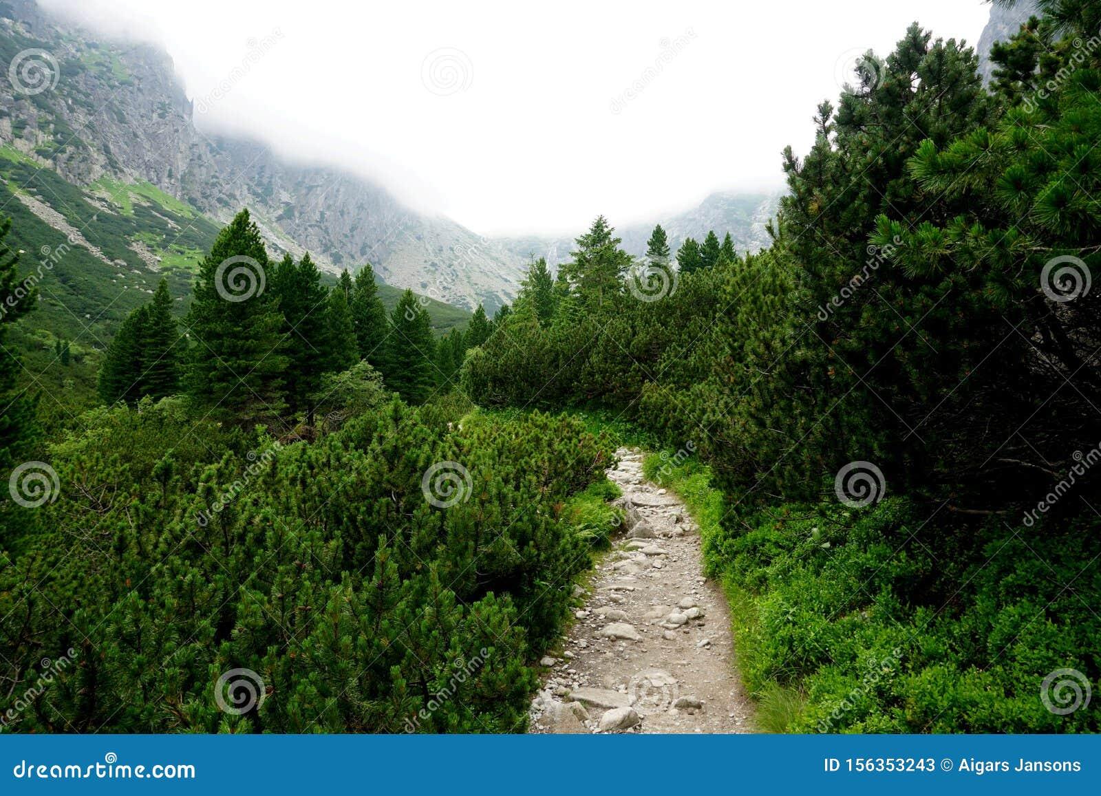 Mountain stone trail through forest in High Tatras.