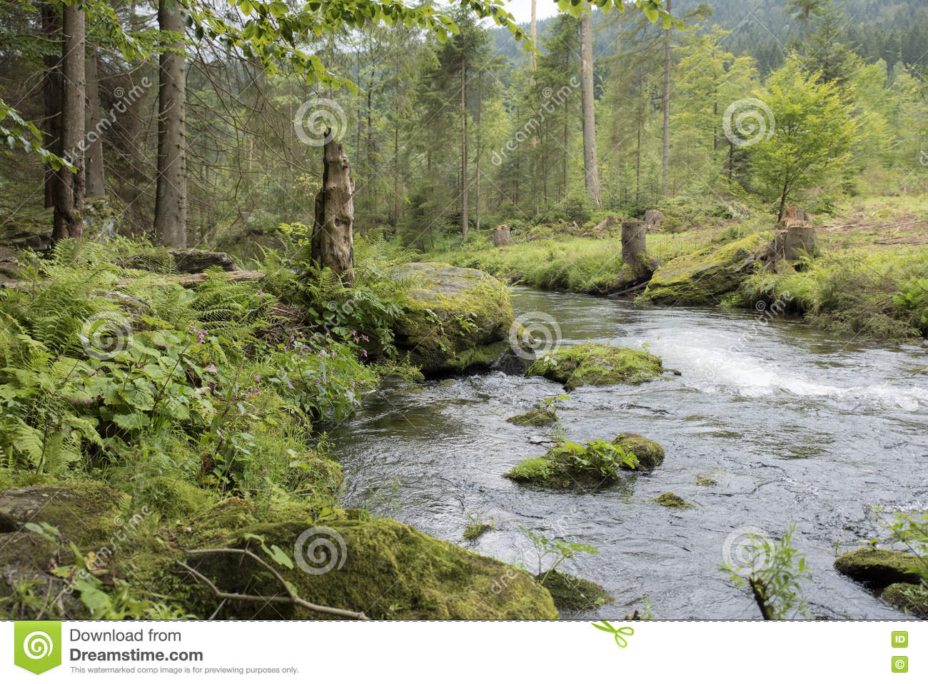 The Forest Stream Deutsch Kinox