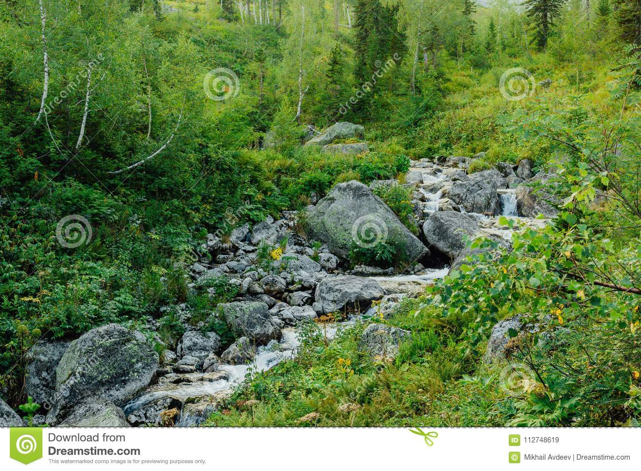 Mountain stream in the forest.