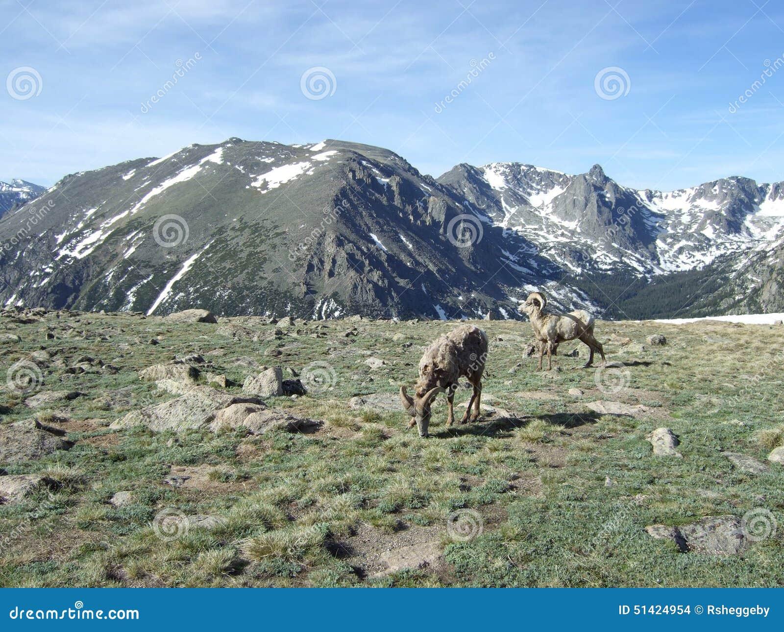 Snow mountain animals - photo#18