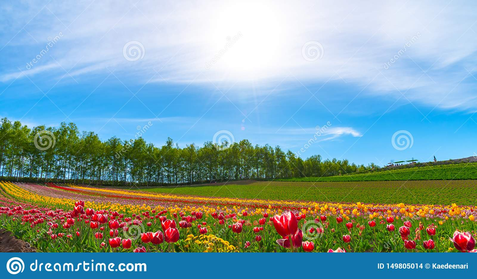 Mountain, Trees and Tulip flowers field with clear blue sky backgound in sunny day