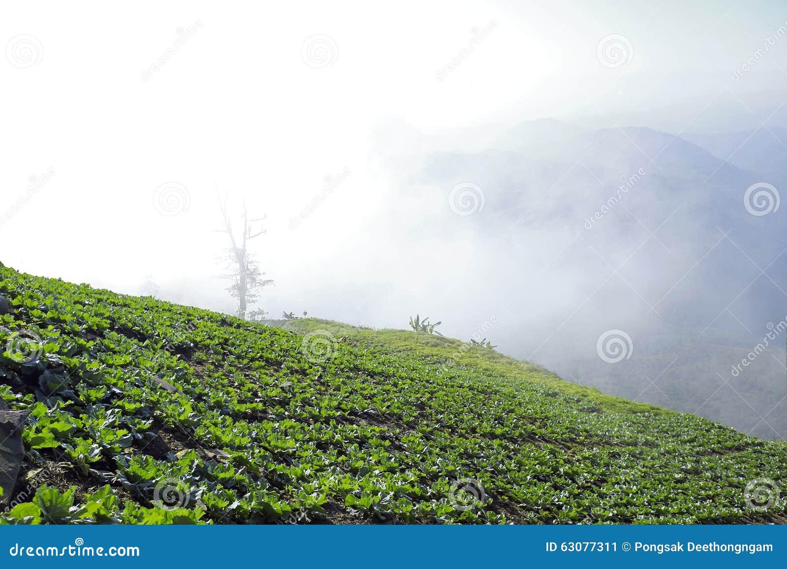 Download Mountain View Avec Le Chemin Chez Phu Tubberk, Point De Repère De Touristes De Province De Phetchabun En Thaïlande Image stock - Image du nature, stationnement: 63077311