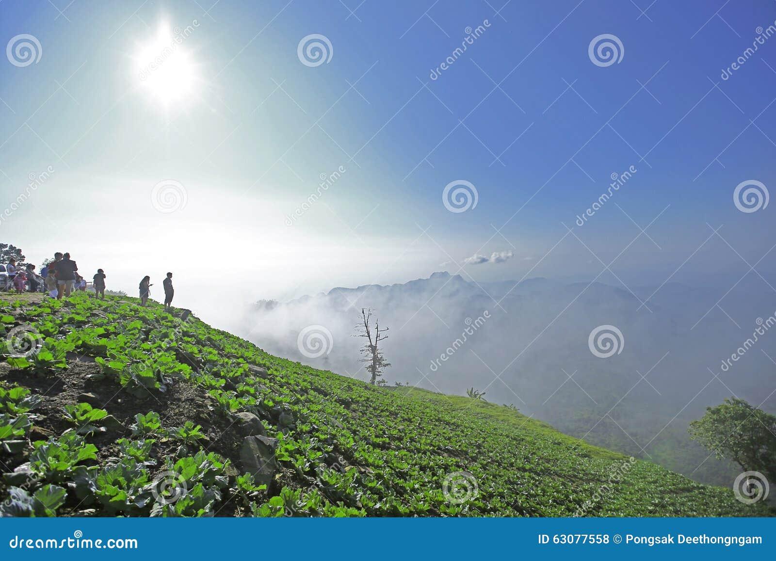Download Mountain View Avec Le Chemin Chez Phu Tubberk, Point De Repère De Touristes De Province De Phetchabun En Thaïlande Photo stock - Image du chaussée, route: 63077558