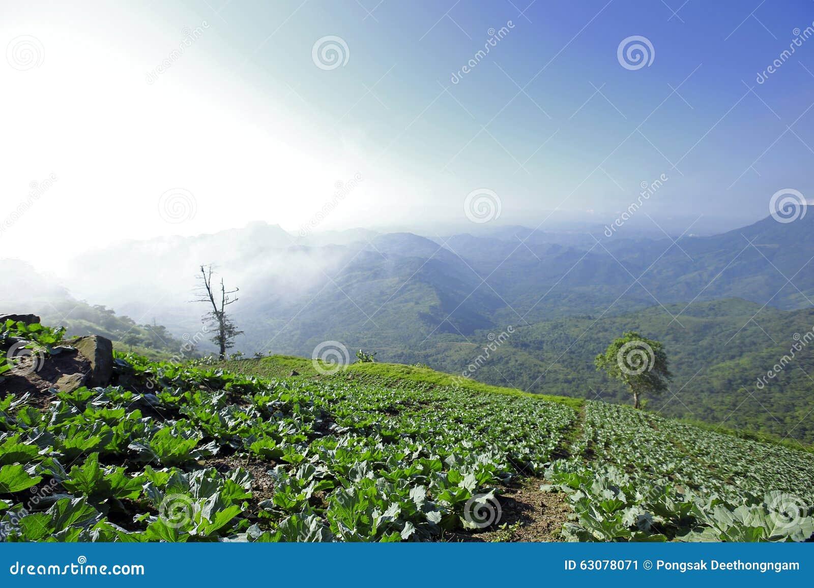 Download Mountain View Avec Le Chemin Chez Phu Tubberk, Point De Repère De Touristes De Province De Phetchabun En Thaïlande Image stock - Image du itinéraire, enroulement: 63078071