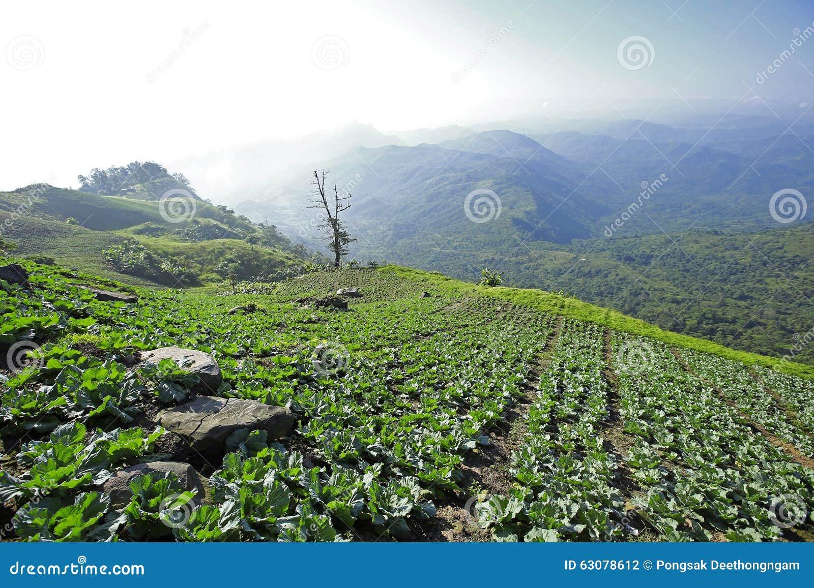 Download Mountain View Avec Le Chemin Chez Phu Tubberk, Point De Repère De Touristes De Province De Phetchabun En Thaïlande Photo stock - Image du vert, alpestre: 63078612