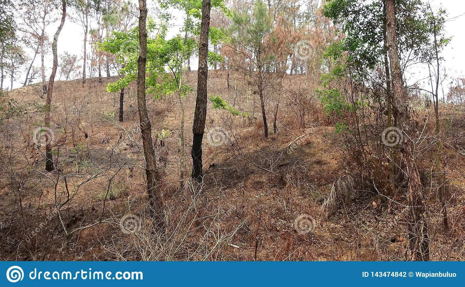 In the mountain burned by fire, there is a small tree that grows green leaves.