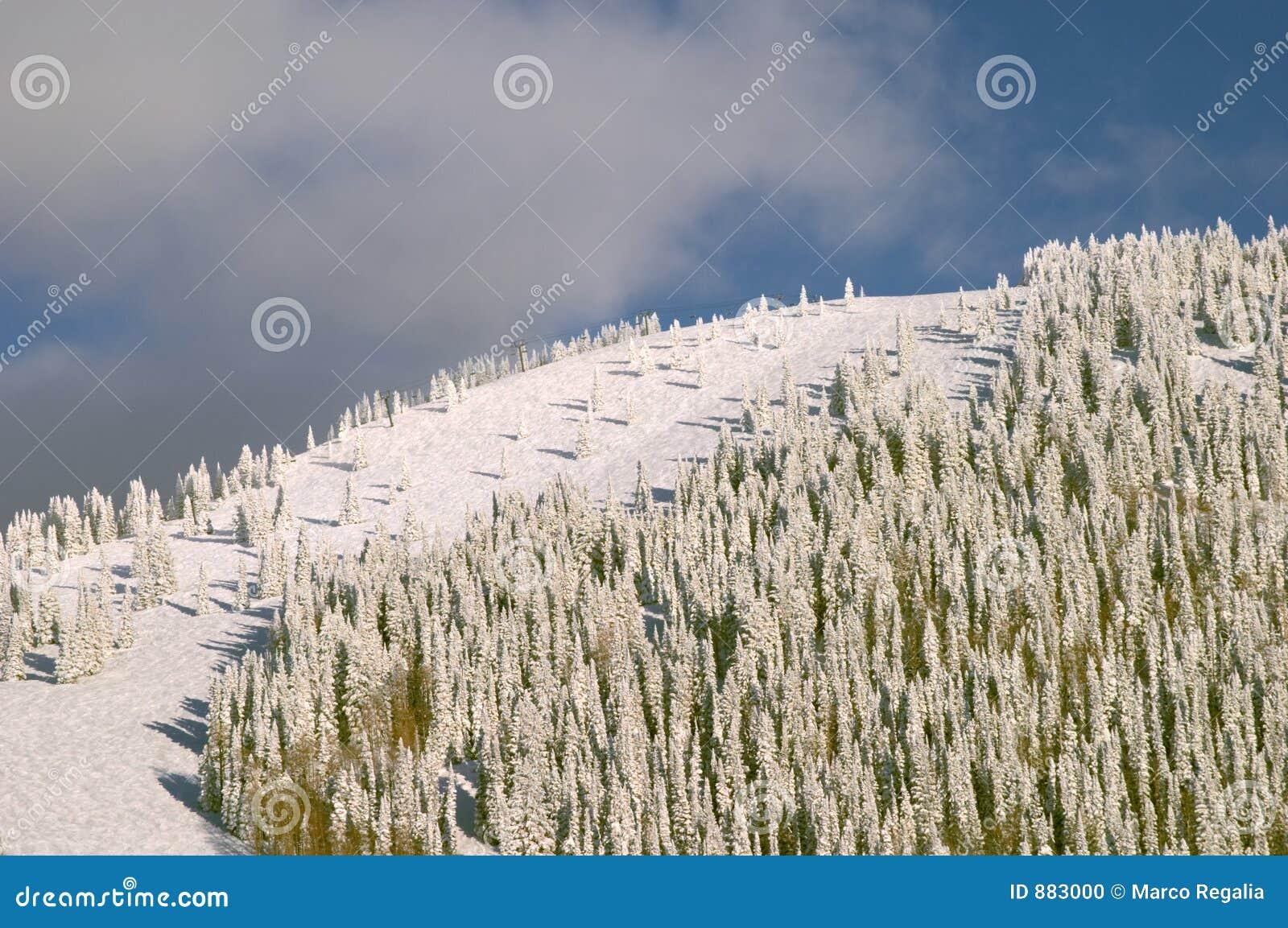 Mountain zalesiona zimy.