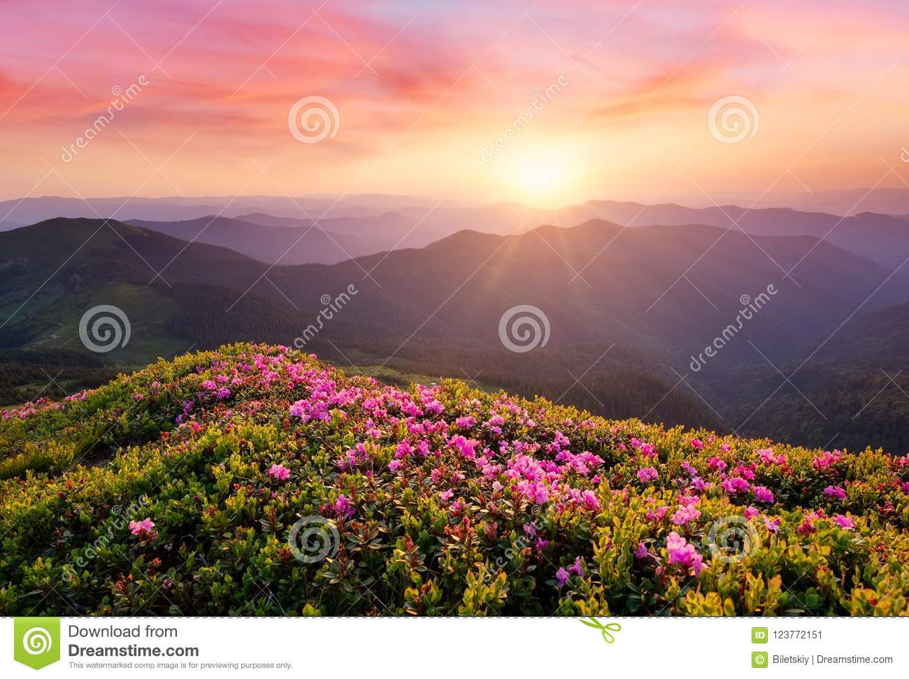 Mountains during flowers blossom and sunrise.
