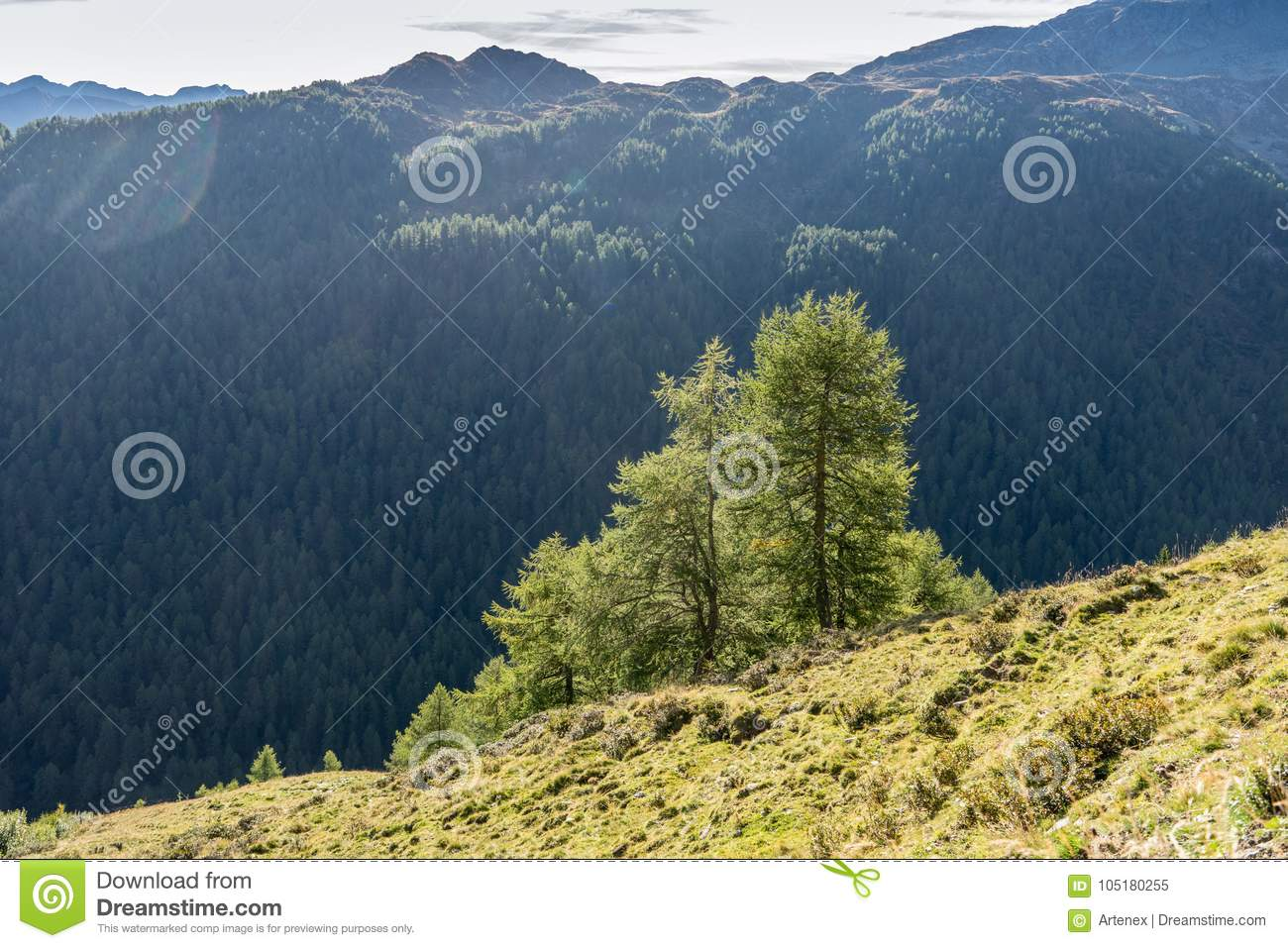 Mountains, peaks and trees landscape, natural environment. Timmelsjoch High Alpine Road
