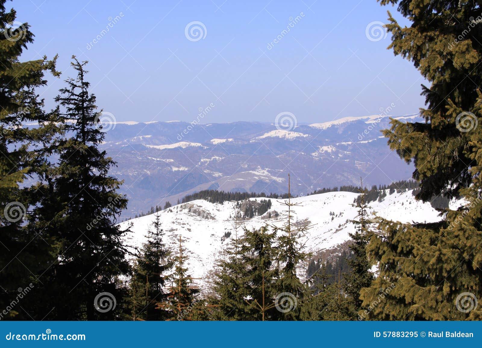 Mountains seen between pine trees in winter