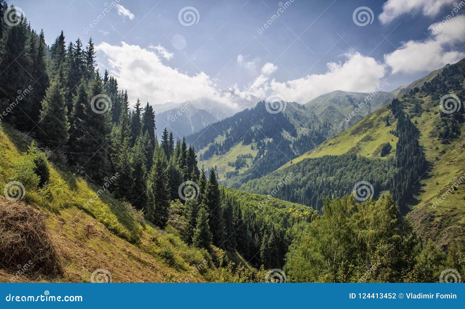 cherche transexuelle forest