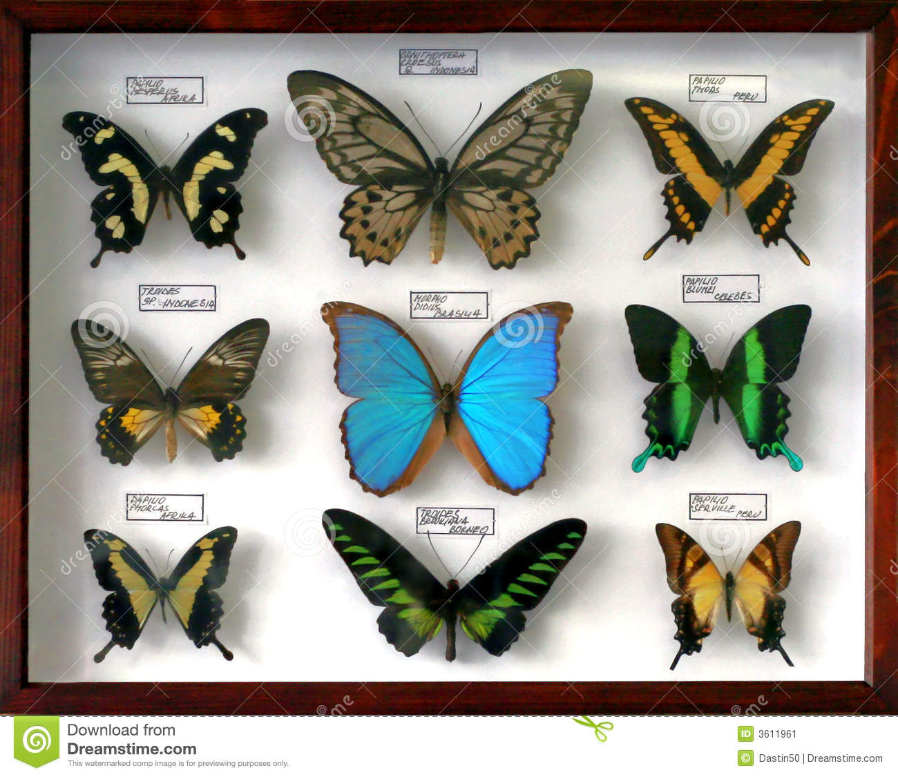 view of a framed and mounted collection of colorful butterflies.