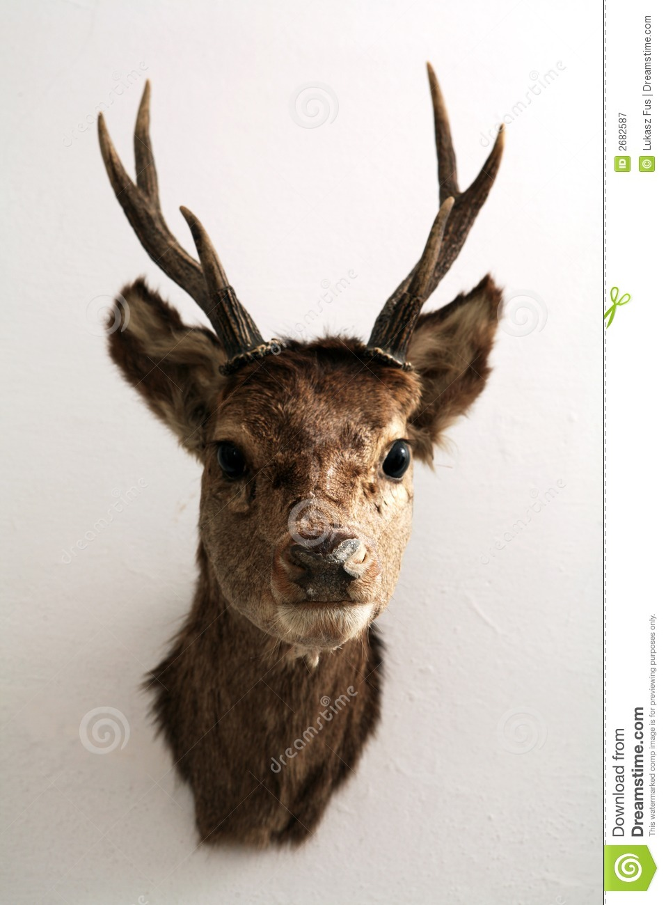 Mounted Deer Head Stock Image Image Of Deer Antler