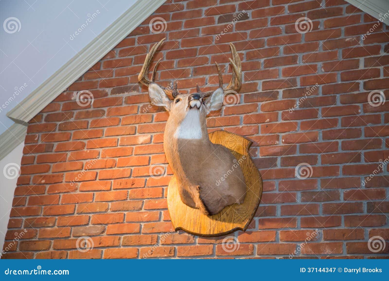 Mounted Deer Head On Brick Wall Stock Image Image Of