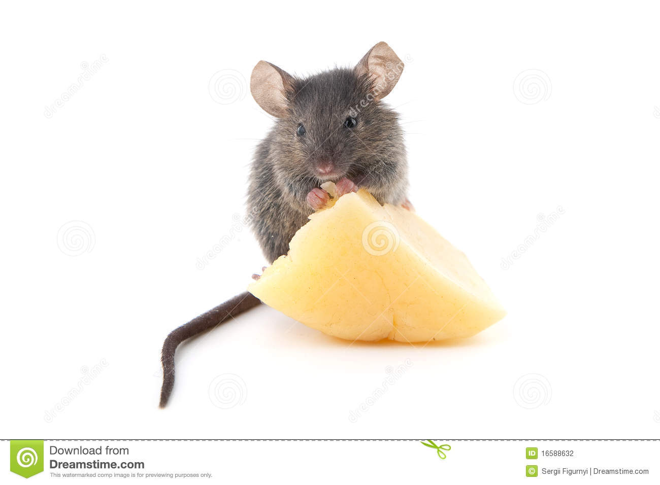 Mouse And Cheese Stock Photography - Image: 16588632