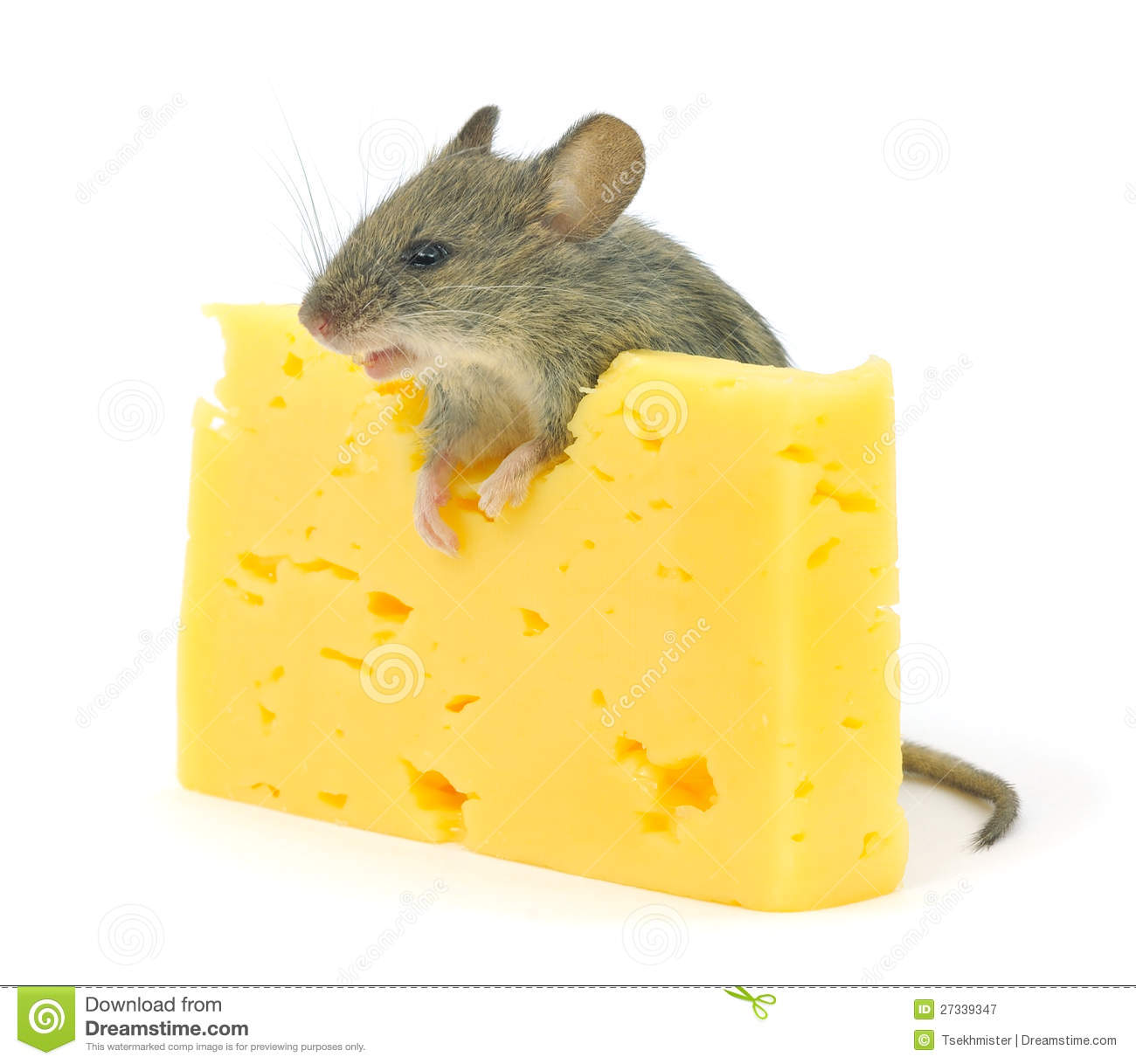 Mouse And Cheese Royalty Free Stock Photography - Image: 27339347
