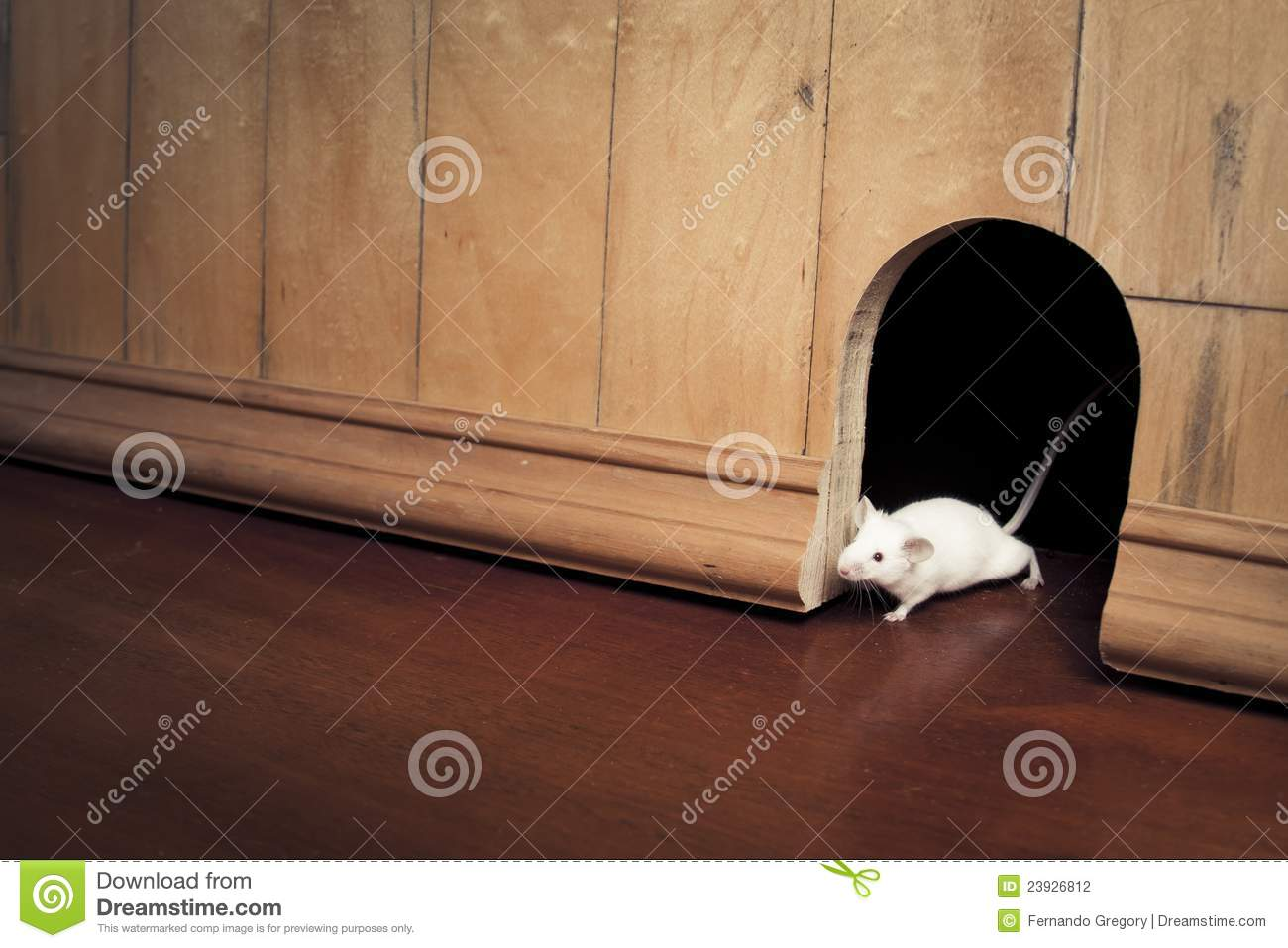 Mouse coming out of it s hole stock photography image 23926812