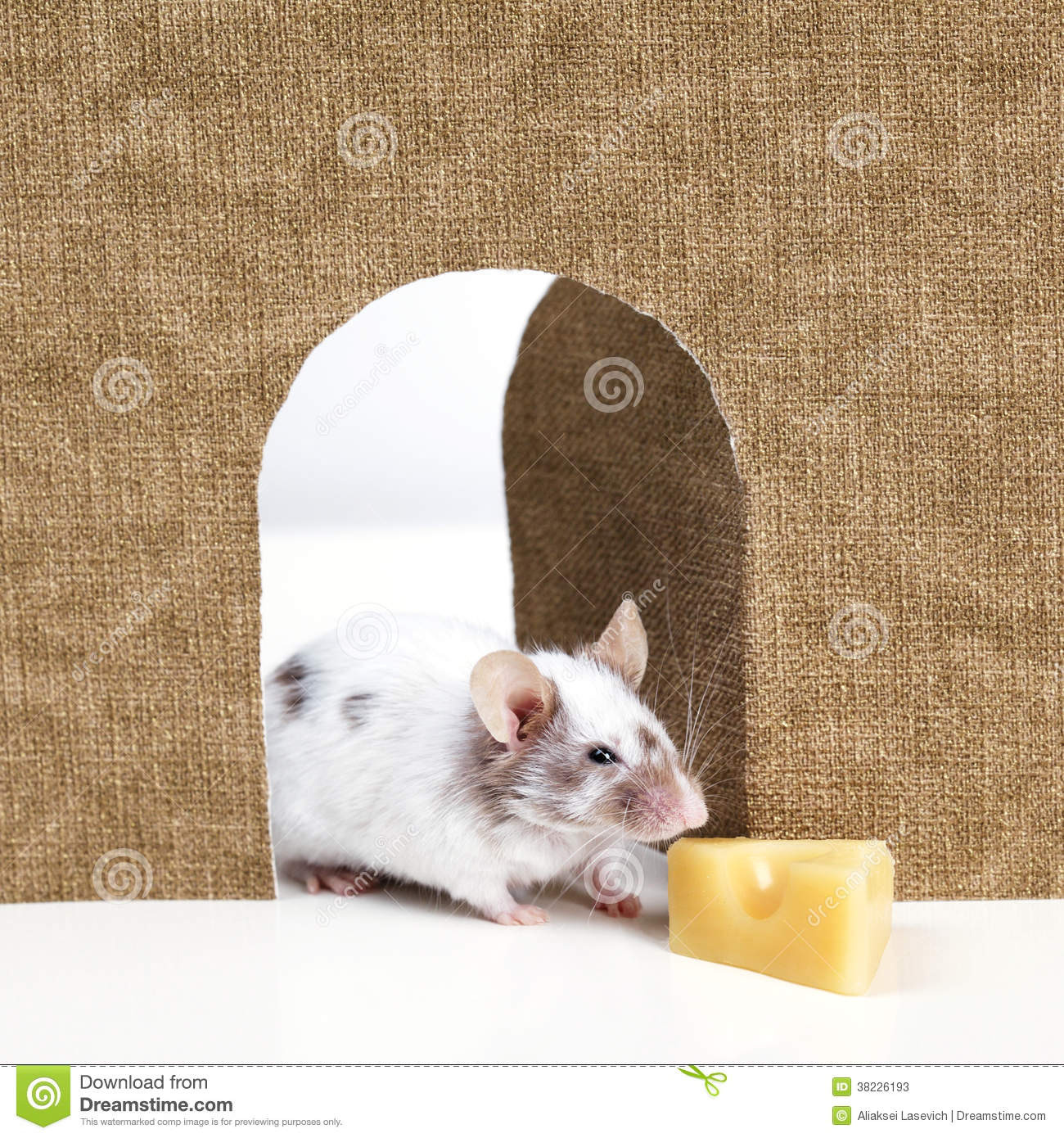 Mouse coming out of it s hole stock photos image 38226193