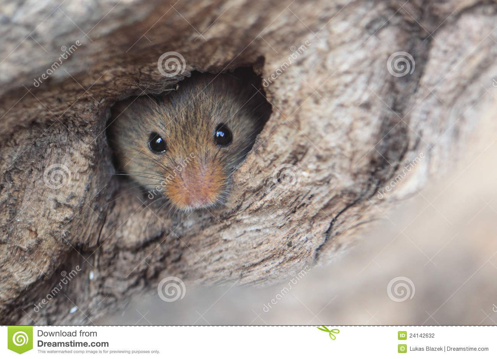 Mouse di raccolta