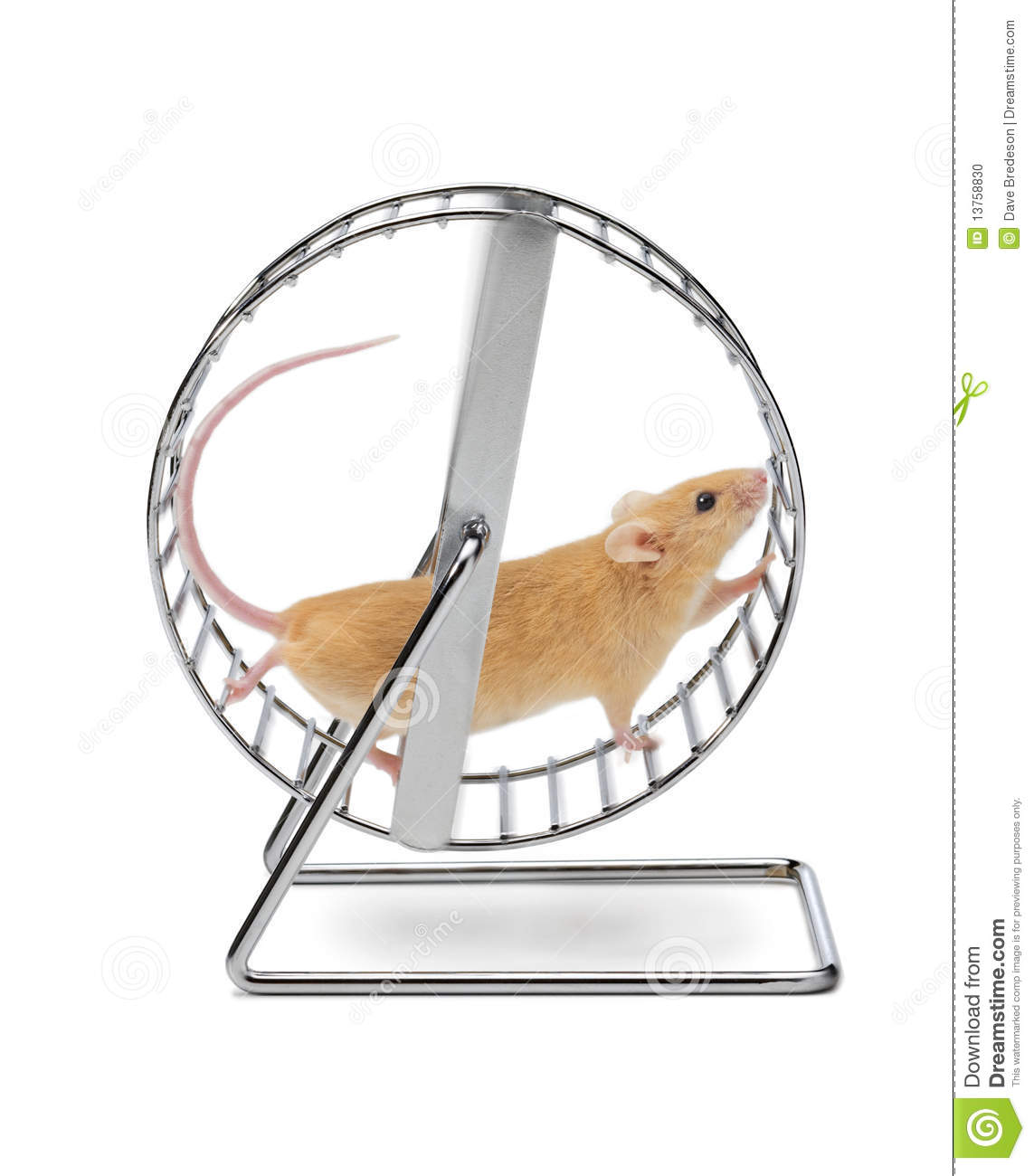 Mouse Hamster Exercise Wheel