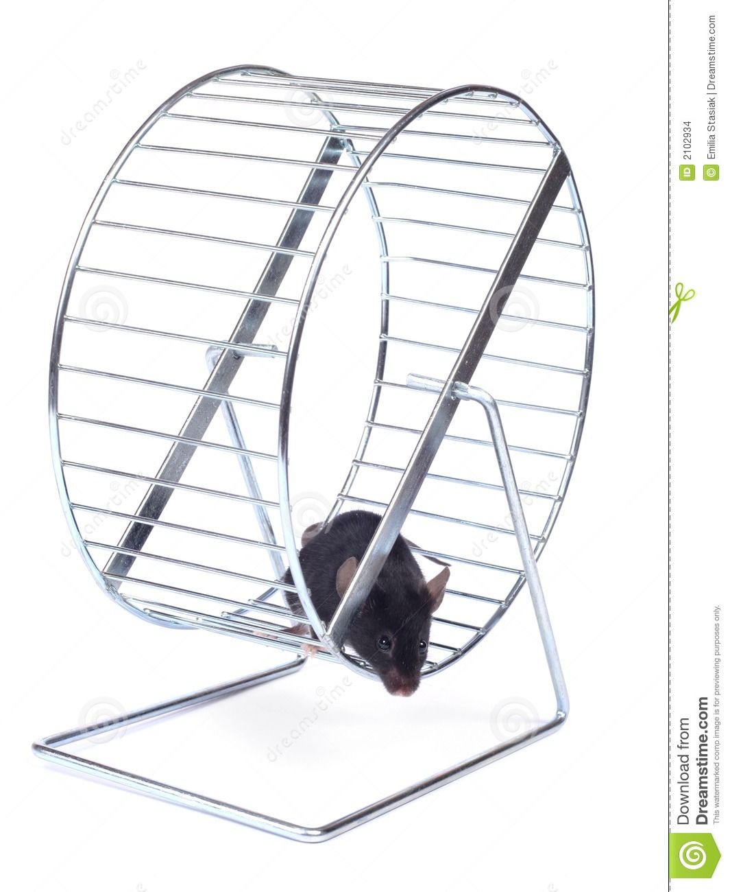 Mouse On An Exercise Wheel Stock Images - Image: 2102934