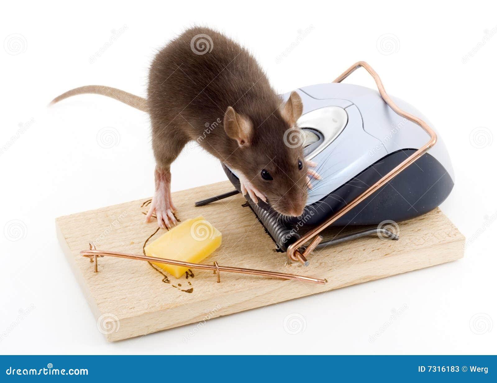 Mouse intelligente