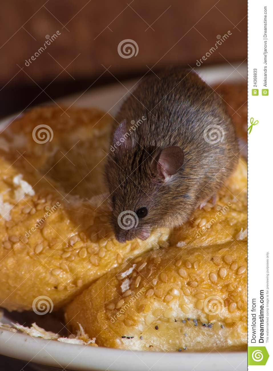 Mouse in the kitchen stock image. Image of kitchen, mice ...
