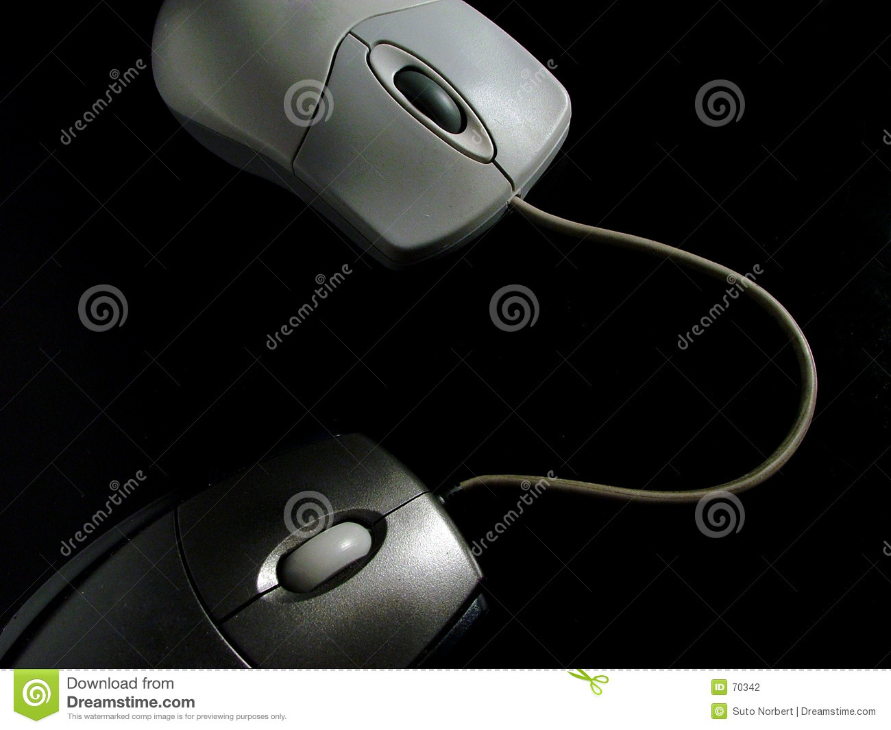 Mouse on Mouse Cyber Sex