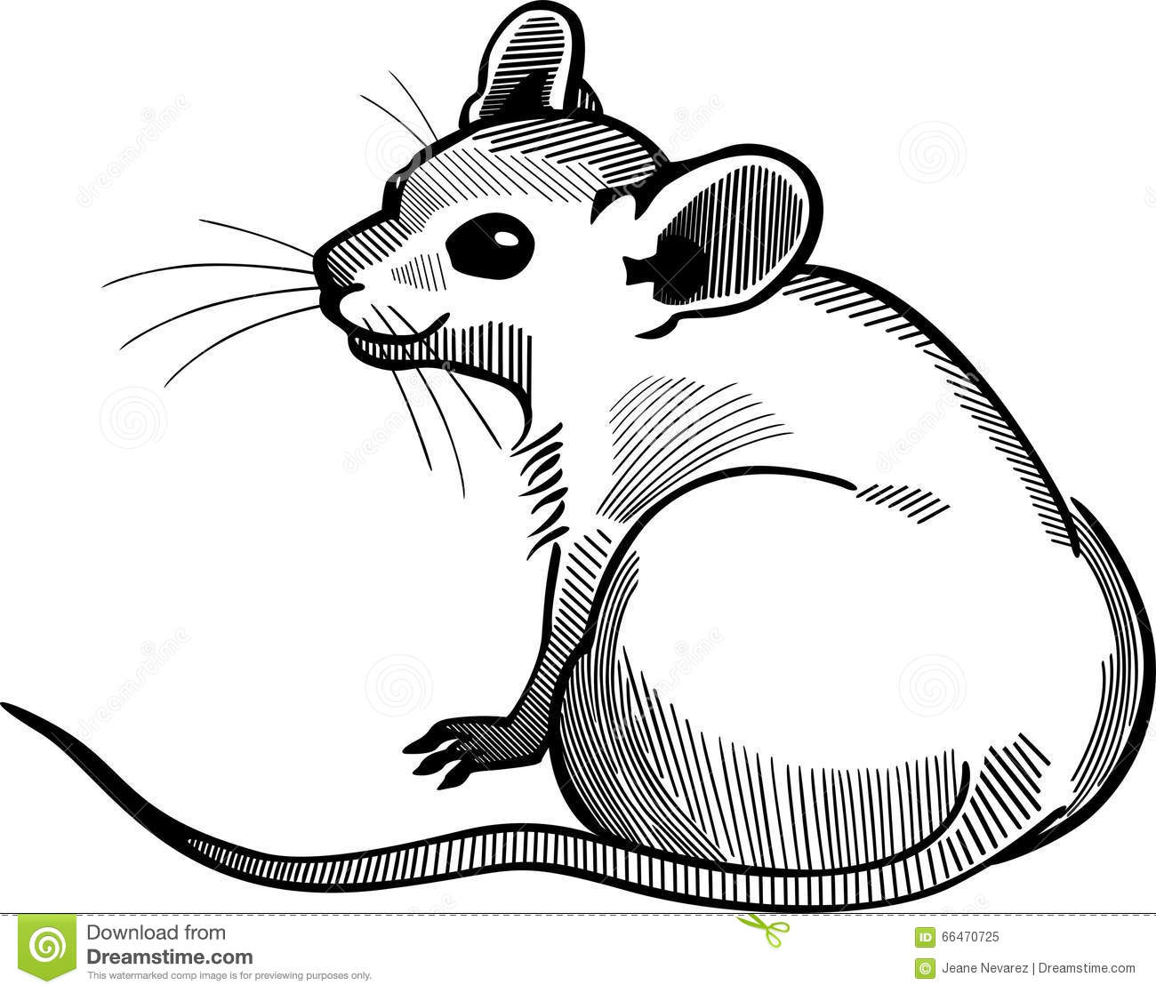 Drawing Lines With Mouse C : Mouse sitting stock vector illustration of white tail