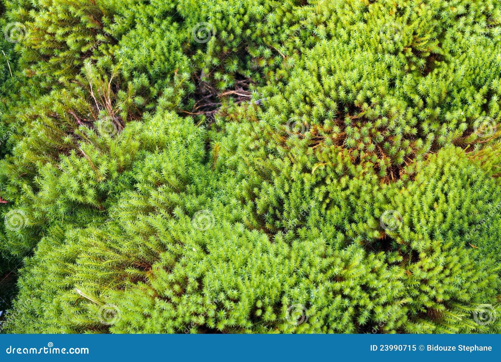 mousse de jardin de zen photo libre de droits image 23990715. Black Bedroom Furniture Sets. Home Design Ideas