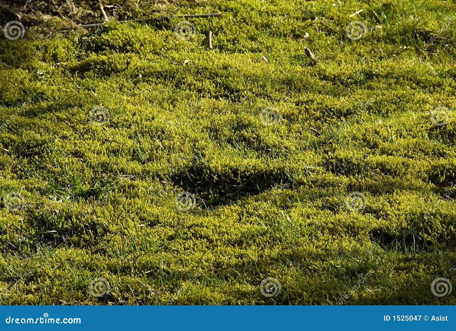 Mousse et tourbe dans la pelouse photographie stock libre for Supprimer la mousse de la pelouse