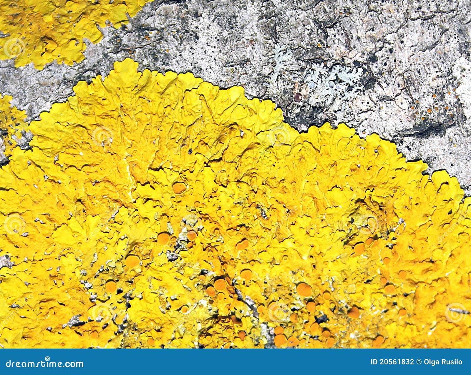 Mousse jaune sur le vieil arbre photographie stock image - Mousse sur les arbres ...